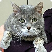 Adopt A Pet :: Gracie - Ludington, MI