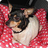 Adopt A Pet :: Sissy - Carmel, IN