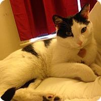 Adopt A Pet :: Dott - Chicago, IL