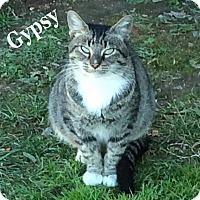 Adopt A Pet :: Gypsy - Bentonville, AR