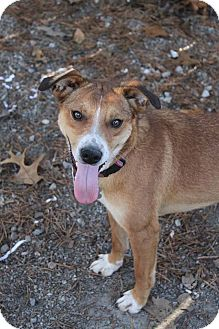 Terrier (Unknown Type, Medium)/Border Collie Mix Dog for adoption in Oakland, Arkansas - Sandy