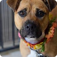 Adopt A Pet :: Bambi - Baton Rouge, LA