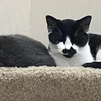 Adopt A Pet :: Mewtwo & Pidgey - Walworth, NY