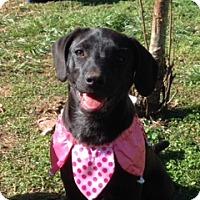 Adopt A Pet :: Emma - Huntsville, AL
