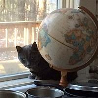 Adopt A Pet :: JadeCP - Carlisle, PA
