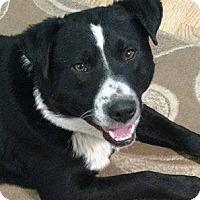 Adopt A Pet :: Snoop - Regina, SK