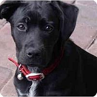 Adopt A Pet :: Redi - Albany, GA