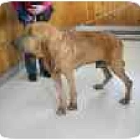 Adopt A Pet :: JAX - Georgetown, KY