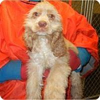 Adopt A Pet :: Frances - Antioch, IL