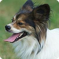 Adopt A Pet :: Boomer - Providence, RI