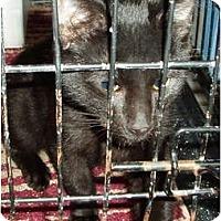 Adopt A Pet :: Dillon - Westfield, MA