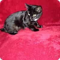 Adopt A Pet :: Sally - Simpsonville, SC