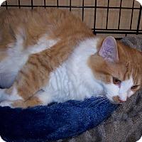 Adopt A Pet :: Junior - Richmond, VA