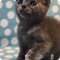Adopt A Pet :: Iris - Union, KY