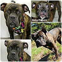 Adopt A Pet :: Lucho - Forked River, NJ