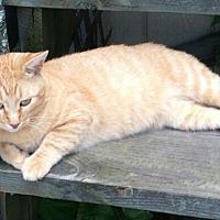 Adopt A Pet :: Leo - Waynesville, NC