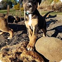 Adopt A Pet :: Dilly - Buffalo, MN