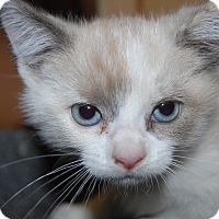 Adopt A Pet :: Rheeta - Whittier, CA