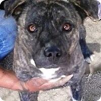 Adopt A Pet :: Hayes - Las Vegas, NV