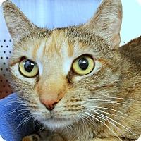 Adopt A Pet :: Naomee - Sarasota, FL