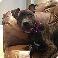 Adopt A Pet :: Talon - Hadley, MI