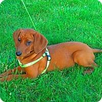 Adopt A Pet :: Dolly *PENDING - Xenia, OH