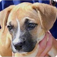Adopt A Pet :: Nancy - Kingwood, TX