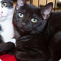 Adopt A Pet :: MaeMae - Irvine, CA