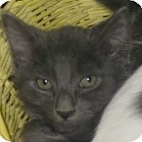 Adopt A Pet :: Stormcloud - Dallas, TX