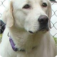Adopt A Pet :: Farrah  *Adopted - Oklahoma City, OK