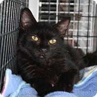 Adopt A Pet :: Charlie - West Hills, CA