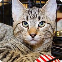 Adopt A Pet :: Erik - Irvine, CA