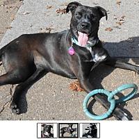 Adopt A Pet :: Juniper - Marion, NC