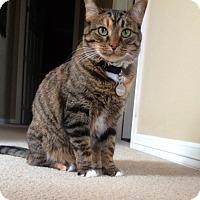 Adopt A Pet :: Reecee - Bentonville, AR