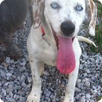 Adopt A Pet :: Skye - Brazil, IN