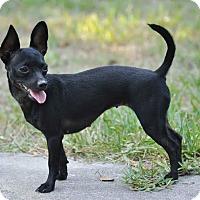 Adopt A Pet :: Jean - Ormond Beach, FL