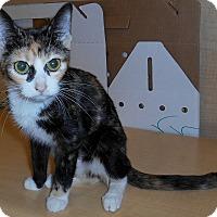 Adopt A Pet :: Rusty - Chattanooga, TN