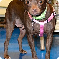 Adopt A Pet :: Hope - Simi Valley, CA