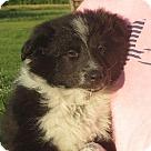 Adopt A Pet :: Rafferty