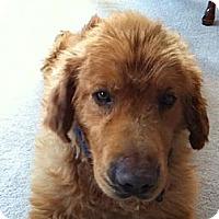 Adopt A Pet :: Duke - Denver, CO