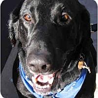 Adopt A Pet :: Zach - Phoenix, AZ
