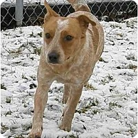Adopt A Pet :: Miley - Meridian, ID