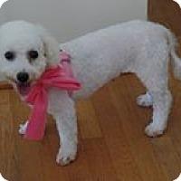 Adopt A Pet :: Corey - South Amboy, NJ