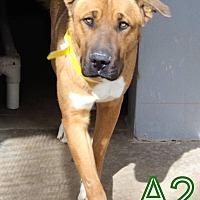 Adopt A Pet :: Scooby Doo - Staunton, VA