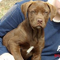 Adopt A Pet :: Mojo (15 lb) Video! - Sussex, NJ
