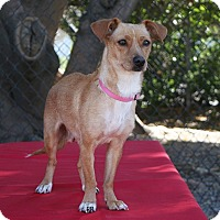 Adopt A Pet :: Mini - Santa Barbara, CA