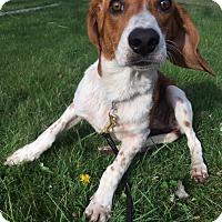 Adopt A Pet :: Wrigley - Media, PA