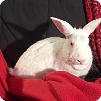 Florida White Mix for adoption in Tampa, Florida - Odette