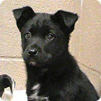 Adopt A Pet :: Gracie - Maynardville, TN