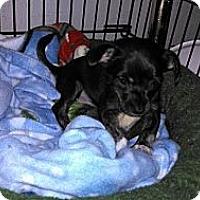 Adopt A Pet :: Peanut - Morgan Hill, CA